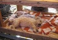 ook-dieren-te-koop-op-de-markt-in-fonyod