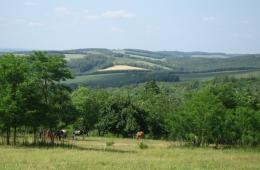 Grazende paarden in de heuvels