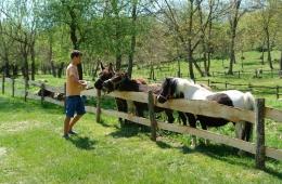 Pony\'s aaien